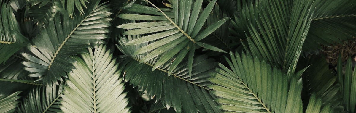 Photo of a plant leaves close up